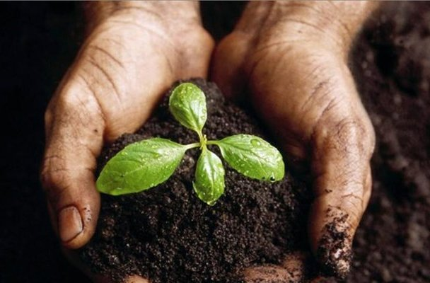 Grow, Eat... Compost & Repeat!